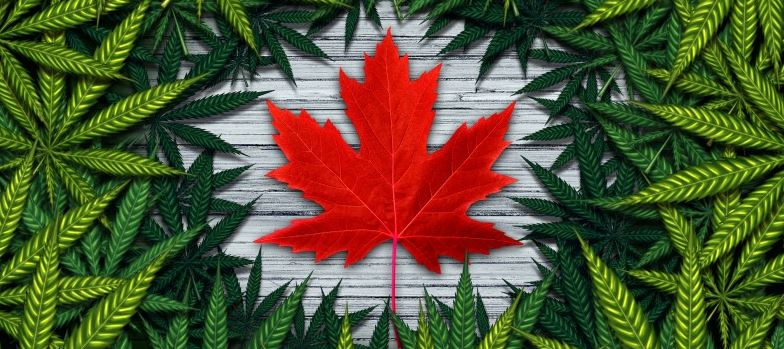 online weed shop Canada
