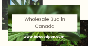 Wholesale Bud Canada